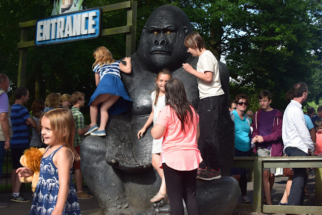 Longleat Safari Park, Days out, family fun, travel, family travel, Jungle Cruise, gorilla, gorilla colony, Nico