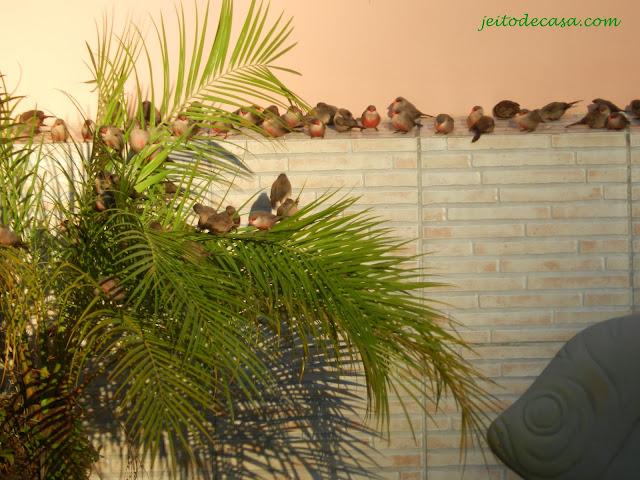 bico-de-lacre-lindo-passarinho