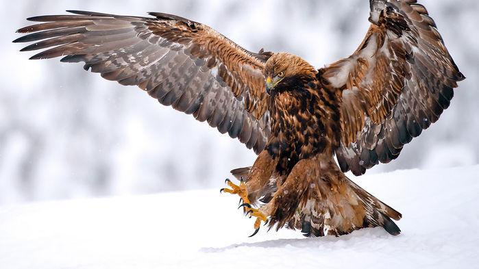 Cambio climático esta ocasionado terribles cambios en los animales del ártico