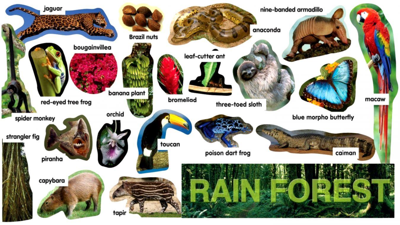 Rainforest Animals Names