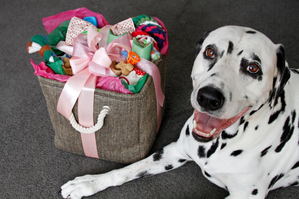 Dalmatian diy assembling a diy dog easter or any occasion gift assembling a diy dog easter or any occasion gift basket negle Images
