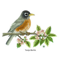 Robin on Blossom Branch (by Tanja Berlin): Tanja's original