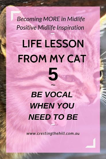 Lessons come from everywhere and this is life lesson #5 from my cat - speak your truth when you need to. #inspiration #lifelesson
