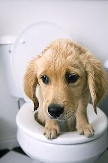 Reasons Your Dog Has Diarrhea