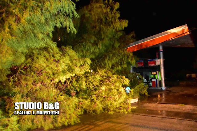 Πεύκο έπεσε πάνω σε πρατήριο καυσίμων στη Νέα Τίρυνθα (βίντεο)