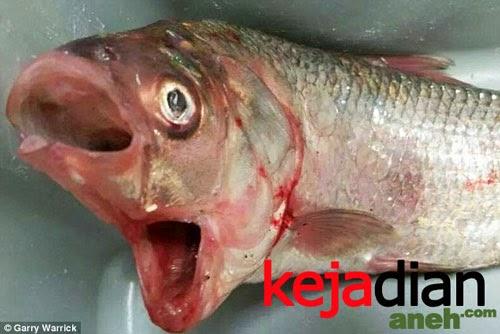 Hewan Aneh Ikan Kakap Bermulut Dua