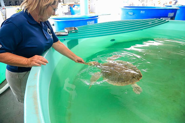 Clearwater Marine Aquarium em Tampa