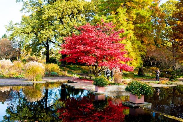 ảnh cảnh đẹp mùa thu đang về