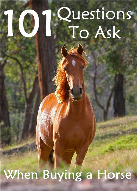 Questions to Ask When Buying a Horse by Savvy Horsewoman