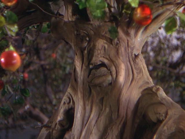 mean tree in Oz