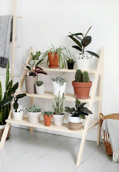 14. Tangga untuk memajang tanaman indoor
