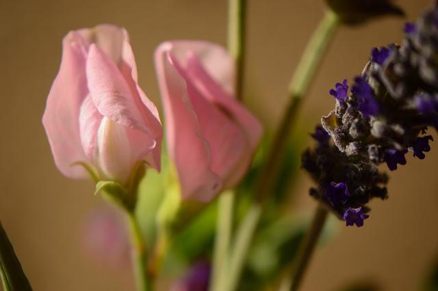 sweet pea, lathyrus, monday vase, small sunny garden, IaVoM, cottage garden, amy myers, desert garden