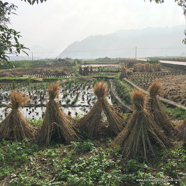 scenic fields in Cangpo Ancient Village in Yantou Town in Zhejiang Province, Wenzhou, China