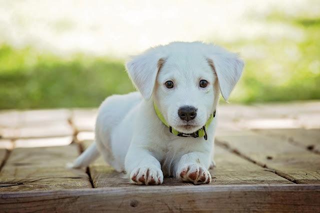 download immagine cucciolo di cane