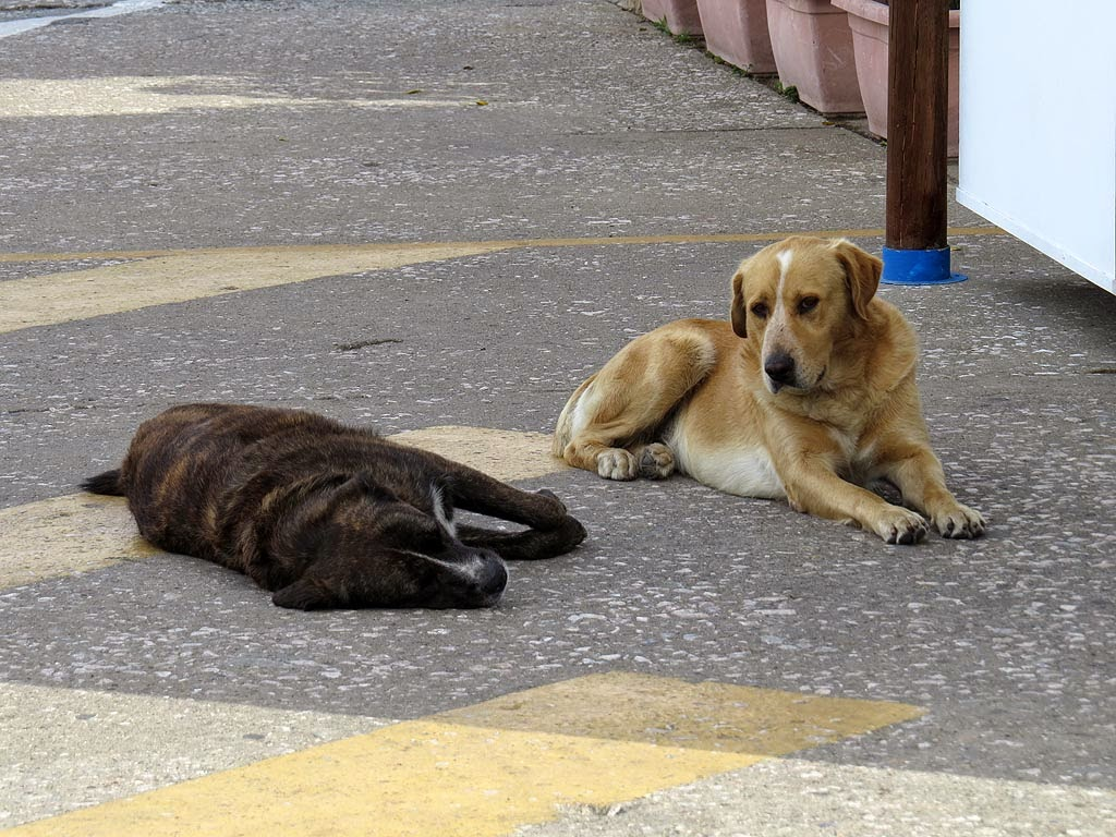 Guard dogs, Yacht Club Livorno, via del Molo Mediceo, Livorno