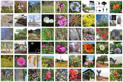 instagram paisajismo, instagram jardines, jardinería, ideas jardines