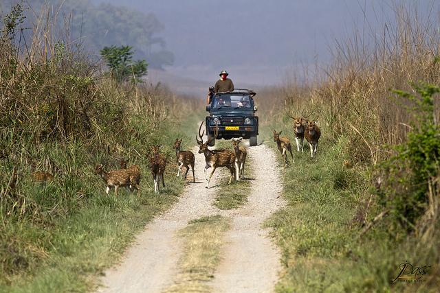 Jim-Corbett-National-park-India