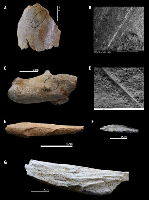 Evidence of hominin activity from Ain Boucherit