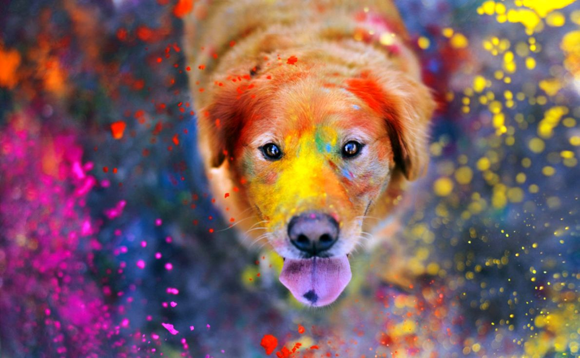 Dog Friend Golden Retriever Hd Wallpaper All In One Wallpapers