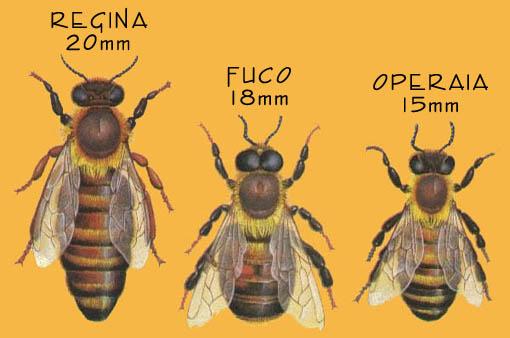 Mammagatta settembre 2016 - Diversi tipi di api ...