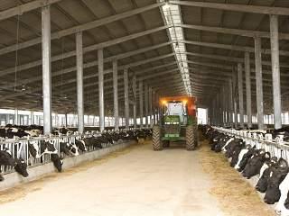 cows farmsanctuary 2