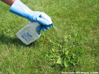 herbicidas para cesped