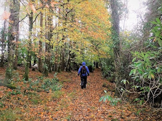 person walking on woodland path strewn with autumn leaves leitrim