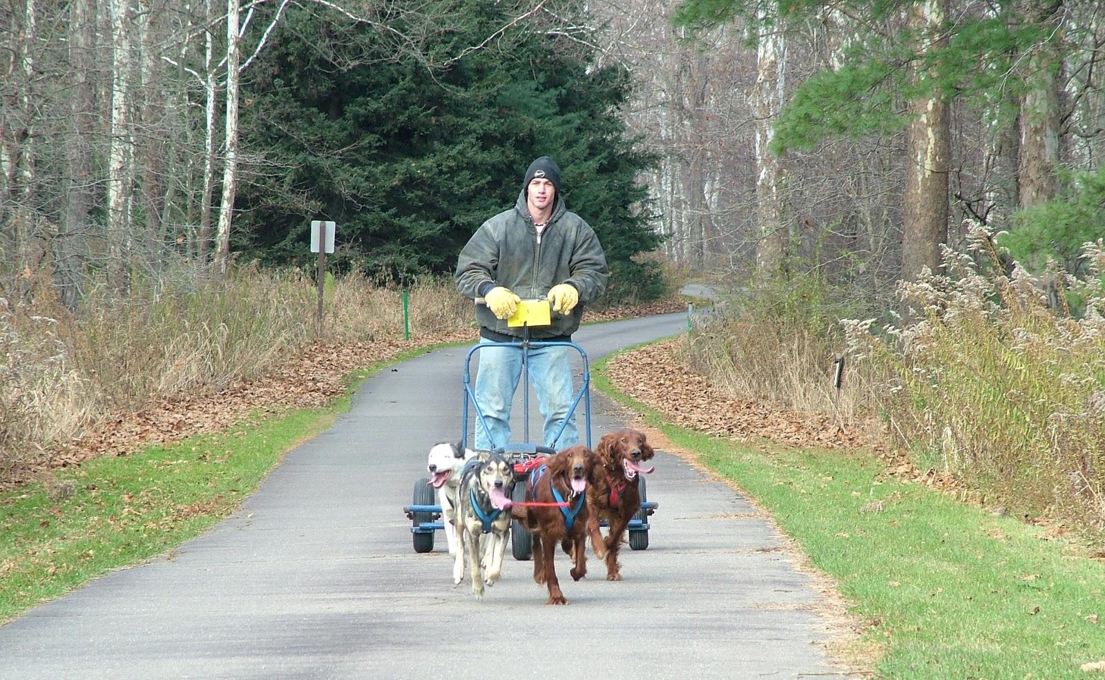 Cameron County Pa News Sled Dog Races At Sinnemahoning