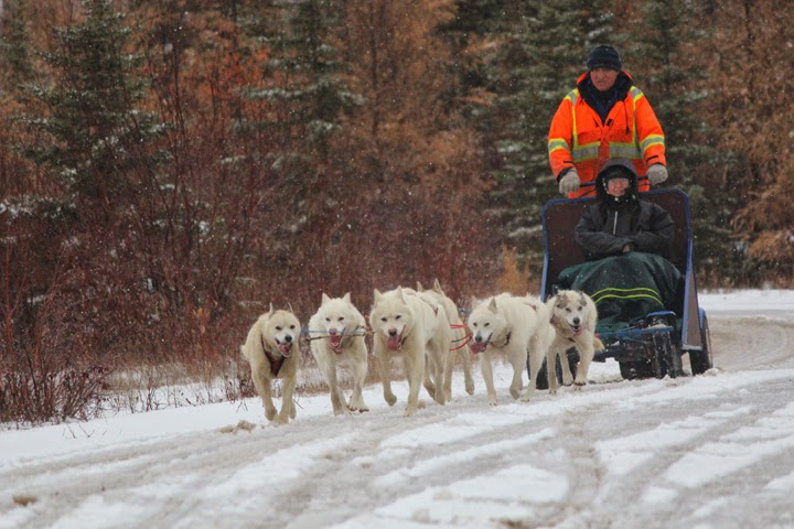 A dog sled experience with Blue Sky Expeditions, Churchill, MB--2014