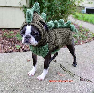 Sinead the Boston terrier in her dino sweater