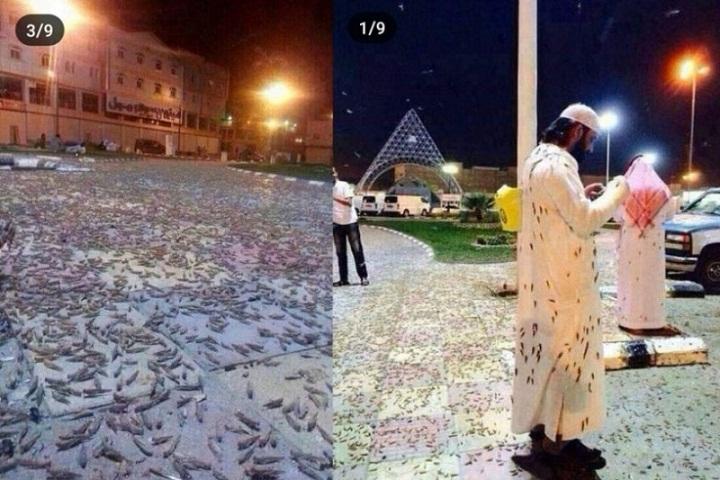 Jutaan Serangga Hitam Mendatangi Makkah, Warga Dunia Geger