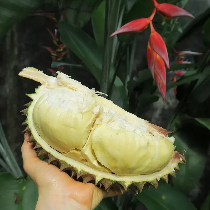 21 Extraordinary Pictures Of National Foods That Seem Uncanny To The Rest Of The World - Durian, Thailand