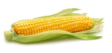 tinggal seumur jagung