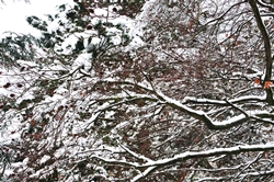 Schnee im Westen...
