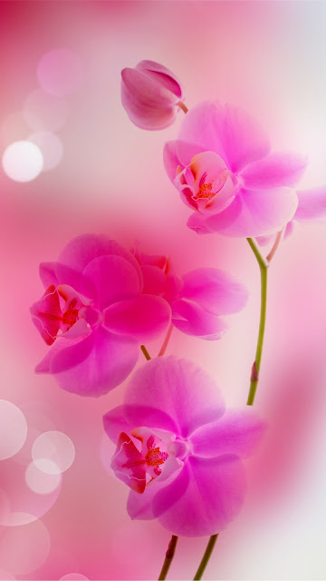 Flower Wallpapers For iPhone Download Free