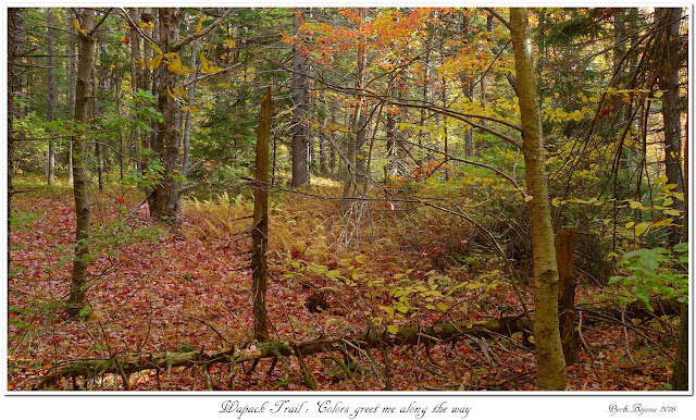 Wapack Trail: Colors greet me along the way