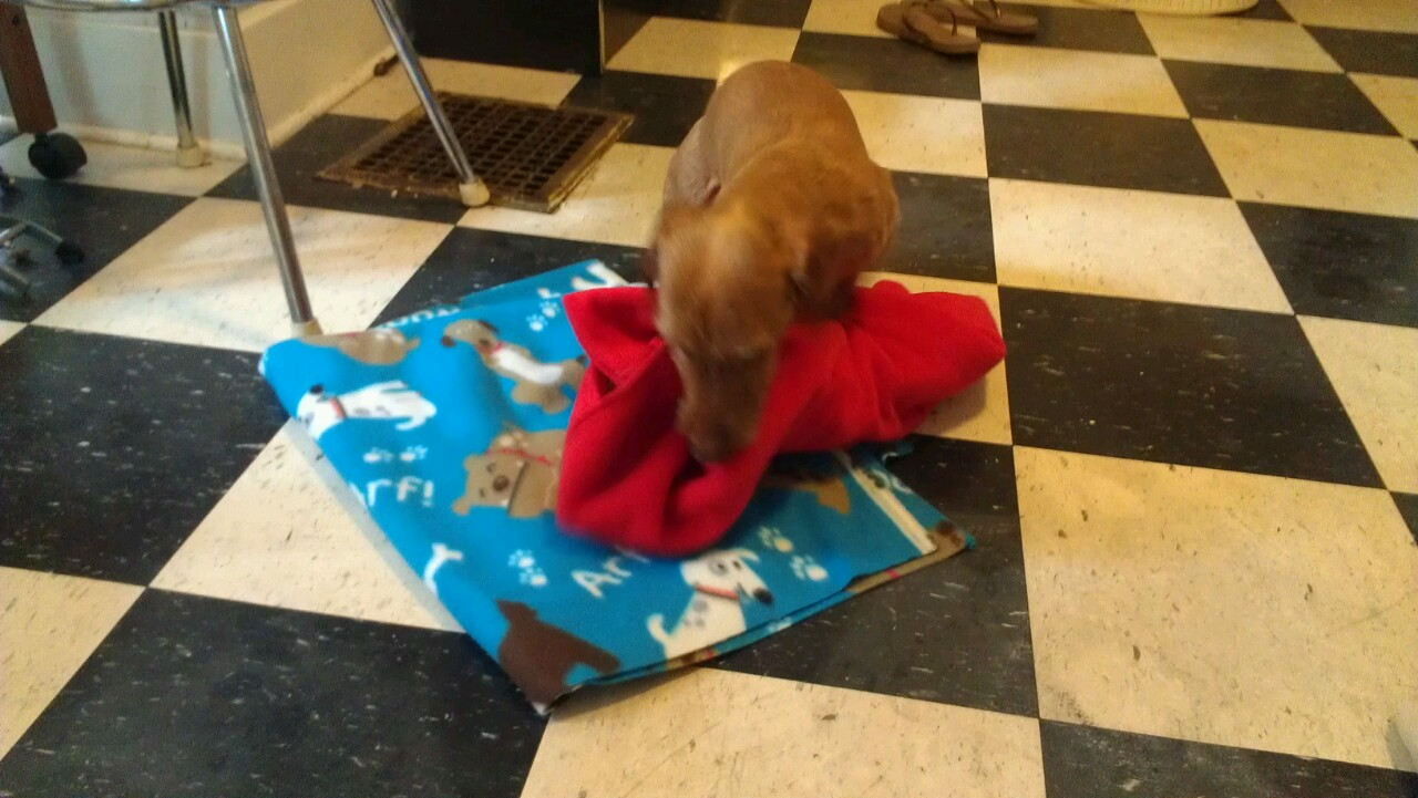 My No-Sew Guide to Life: No-Sew-No-Stuffing Dog Bed
