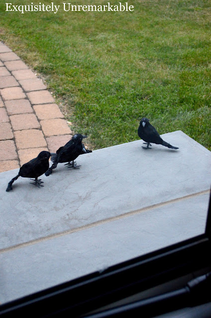 Black Birds on the front stoop