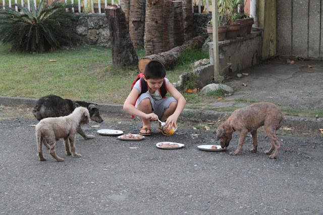 Ken, the 9 year old Filipino boy feeding street dogs