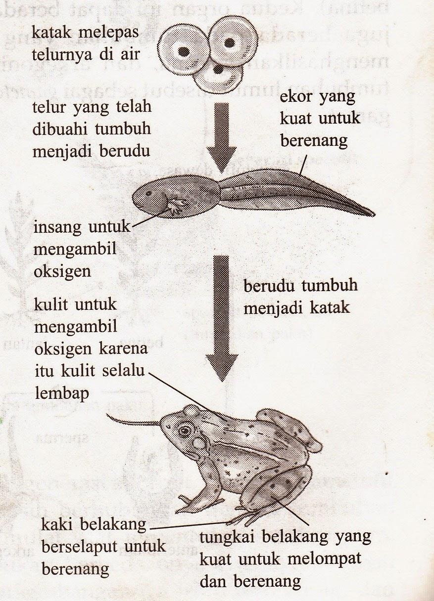 Tahapan Pertumbuhan dan Perkembangan hewan