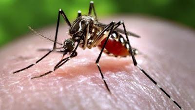 Se buscan 60 voluntarios que se dejen picar por mosquitos para probar nueva vacuna