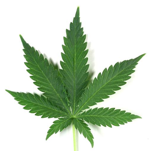 Sick animals plants medicine herbal based