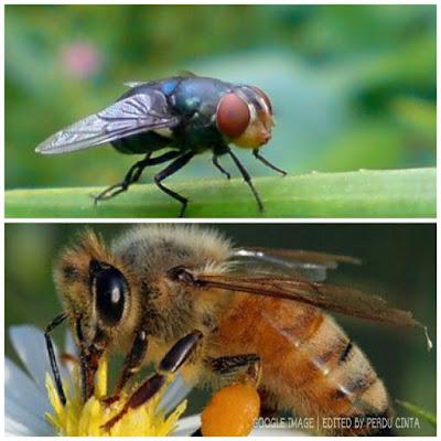 Mata Lalat Atau Mata Lebah