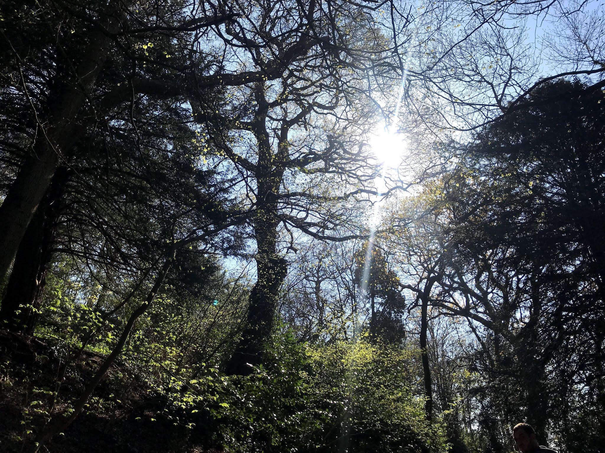 Sun shining through tree - blue skies. April round up blog post