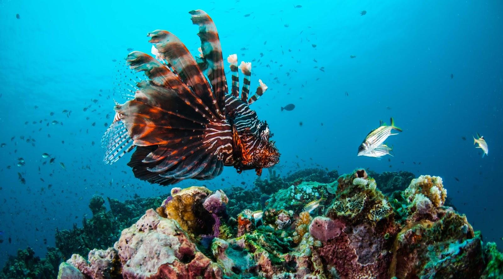 Anda akan dibuat terpesona oleh kekayaan biota laut khas pulau Moyo. Anda tidak akan menyesal selama menyelam di bawah laut Moyo. Anda akan dapat berenang bersama beranekaragam jenis ikan yang memiliki warna-warna yang cantik.