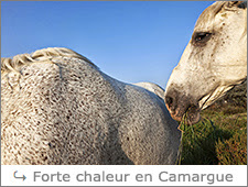 http://www.laurentbessol-photographies.fr/p/camargue.html