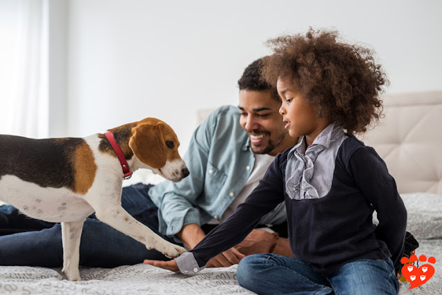 The importance of spreading quality information and the best ways to counteract misinformation in dog training. Photo shows child and parent training dog to shake paw for a treat.