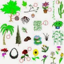 منتجات نباتية بالانجليزى