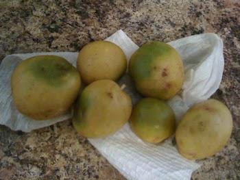 ΠΡΟΣΟΧΗ! Αν δείτε αυτό στις πατάτες, πρέπει ΑΜΕΣΩΣ να τις πετάξετε – Κίνδυνος νευρολογικού προβλήματος