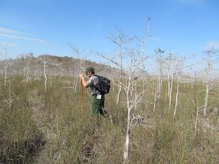 Ranger Led Swamp Walk